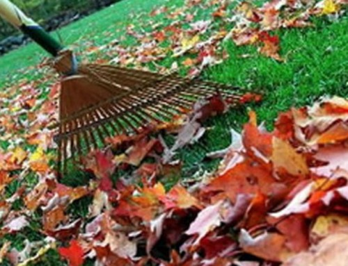 Leaf collection, storm drains, winter parking